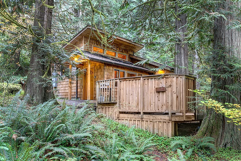 Deep Forest Cabins