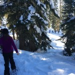 Ranger Guided Snowshoe Trip